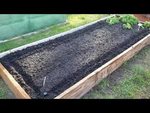 Как посеять БАРХАТЦЫ. Как лучше сеять БАРХАТЦЫ. | вредителей | приятный | бархатцы | посеять | семена | месяце | лучьше | цветы | сеять | когда