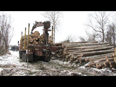 Вопрос: Почему нельзя бессистемно вырубать лес?