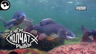 Камчатский хариус О чем молчат рыбы