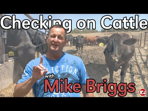 Checking in on Cattle with Mike Briggs | June 7, 2019