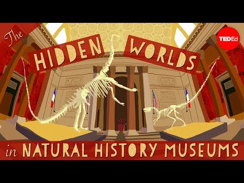 Video image: The hidden worlds within natural history museums - Joshua Drew