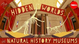 The hidden worlds within natural history museums - Joshua Drew