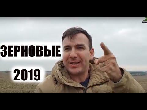 Уезжаю из Украины. Большой зимний обзор зерновых 2019. Ячмень. Пшеница
