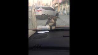 Barney  Cat