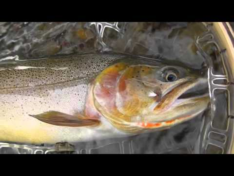 Colorado Fly Fishing   2015 Edit