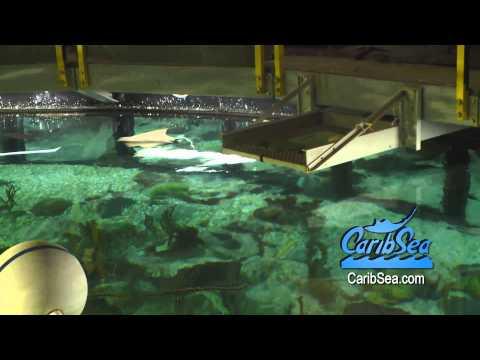 SHEDD Aquarium the 90,000 gallon Caribbean Reef with Blue Zoo TV