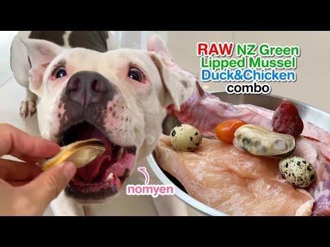 nomyen-the-pit-bull-eats🍖raw-duck-chicken-combo-[asmr]-mukbang- -犬が生の肉を食べる- -개는-날-음식을-먹는다-barf-diet