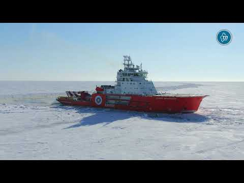 """Экипаж ледокола """"Александр Санников"""" спас замерзающую собаку во льдах Обской губы"""
