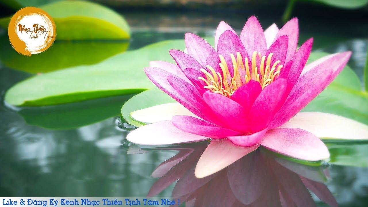 Nhạc Thiền Tịnh Tâm – Thanh Tịnh Hoa Sen ( Nhẹ nhàng và thư giãn )