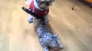 両方♀です^_^; とっても人&犬懐っこいネコで自分からすり寄っていきます.