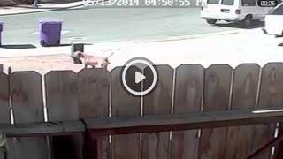 Кот спас ребёнка! Видео с животными