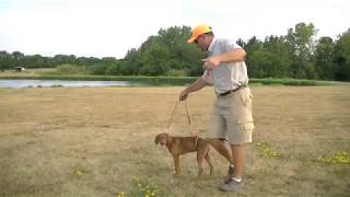 Pointing Dog Puppy Training with Gun Dog Success thumbnail
