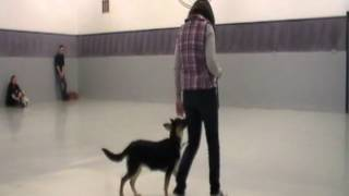 Dog Trainers Long Island, Sublime K9 Dog Training