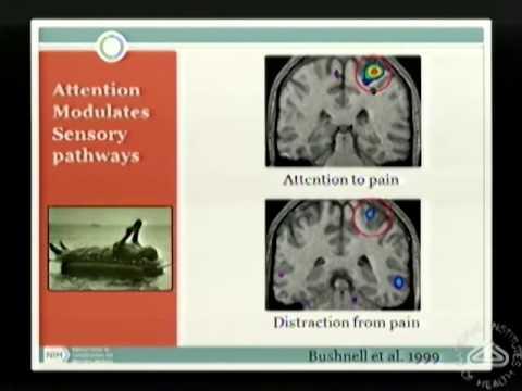 Attention vs. Emotion