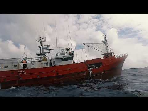 Greenpeace denuncia matanza de millones de tiburones por falta de regulación