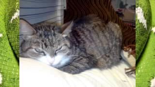 Кошки или просто котэ