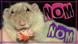 Rat Monchichi nom nom song