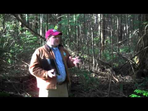 Small forest management