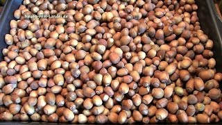 Nüsse - sammeln statt plattfahren
