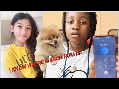 CALLING TXUNAMY FROM FAMILIA DIAMOND ABOUT HER LOST PUPPY MARCH POM ( She answered) its Minai