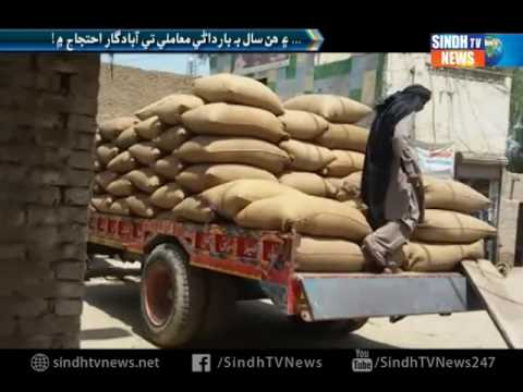 Sindh Wheat Growers Distressed over Delay in Procurement  Report - Sindh TV News