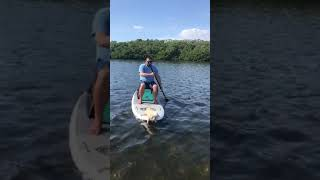 Dog Gets on Boat to Try Paddleboarding With Both Hands - 1069680