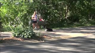 Ozzy (miniature Australian Shepherd) Boot Camp Dog Training Video