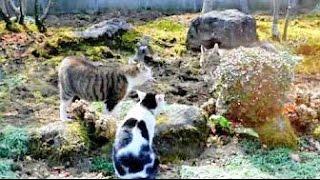 この後決死の覚悟で逃げる飼い猫がまた面白いのでよかったら見て下さい...