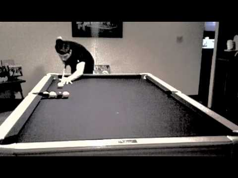 PacMan's Quick 9 Ball Run And Some Stupid Trick Shots