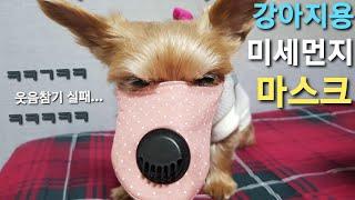 (사용후기) 강아지용 미세먼지 마스크 ..  웃ㅋ음참기…