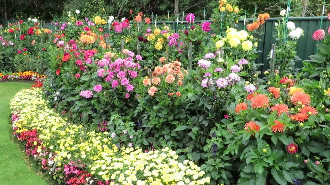 Geoff And Heather 39 S Dahlia Garden 20 August 2014 Youtube