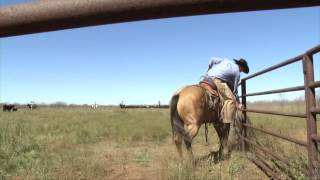 muleshoe ranch 2014 zoetis aqha best remuda winner