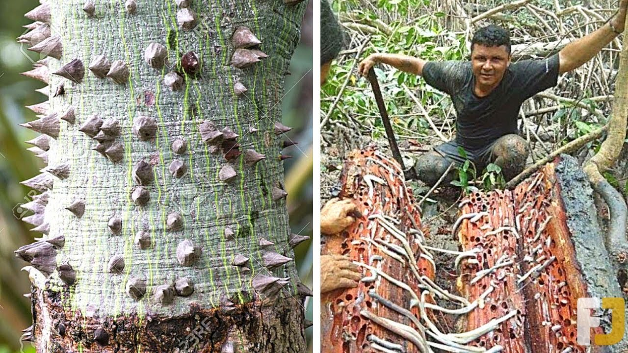 12 Dangerous Trees You Should NEVER Touch