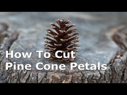 How To Cut Pine Cone Petals