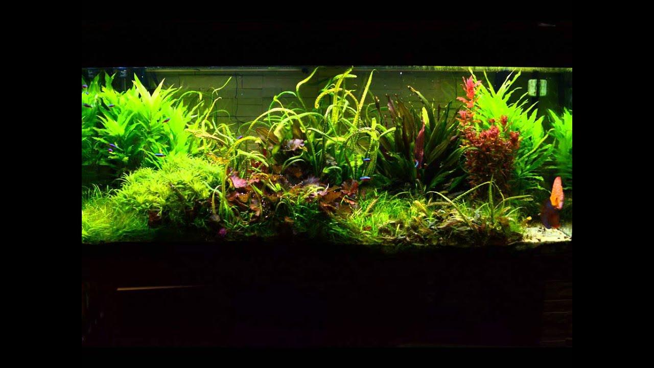 Aquatlantis Easy Led Freshwater Отзывы - фото 4