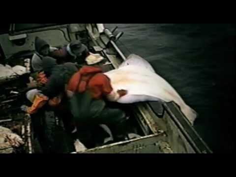 SAVING OCEAN FISHERIES