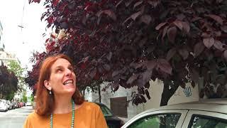 Τα δέντρα της Αθήνας: Προύνος / Καλλωπιστική Δαμασκηνιά