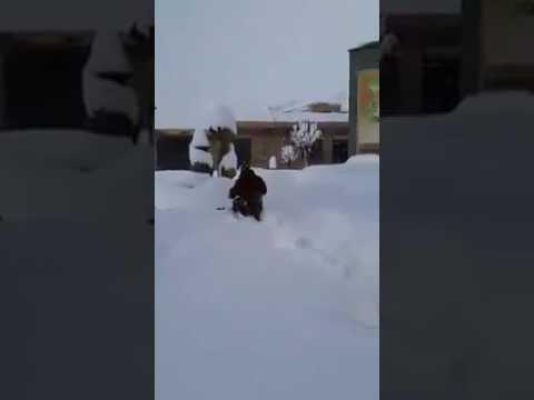 Huge amounts of snow in northern Setif, Algeria