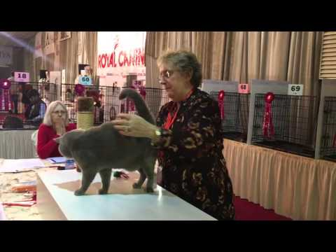 K-Cats Cat Show 2016 Kuwait