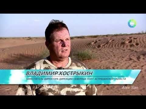 """AST-NEWS.ru: """"Такие странные"""""""