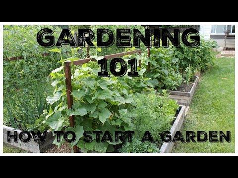 Gardening 101:  How To Start A Garden