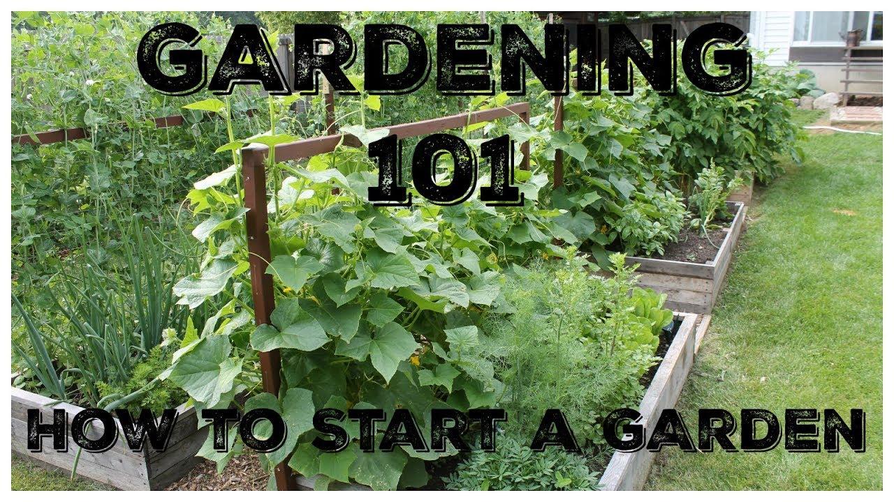 Download Gardening 101:  How To Start A Garden