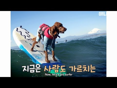 A dog that teaches people how to surf?!