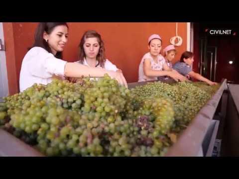 Armenia Wine Company_Harvest 2017