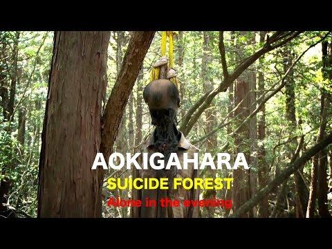 AOKIGAHARA ,SUICIDE FOREST JAPAN ,FLORESTA DO SUICIDIO!! A NOITE E SOZINHO   Parte 2