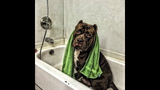 HULK TAKES OVER Cross Bronx Pet Shop