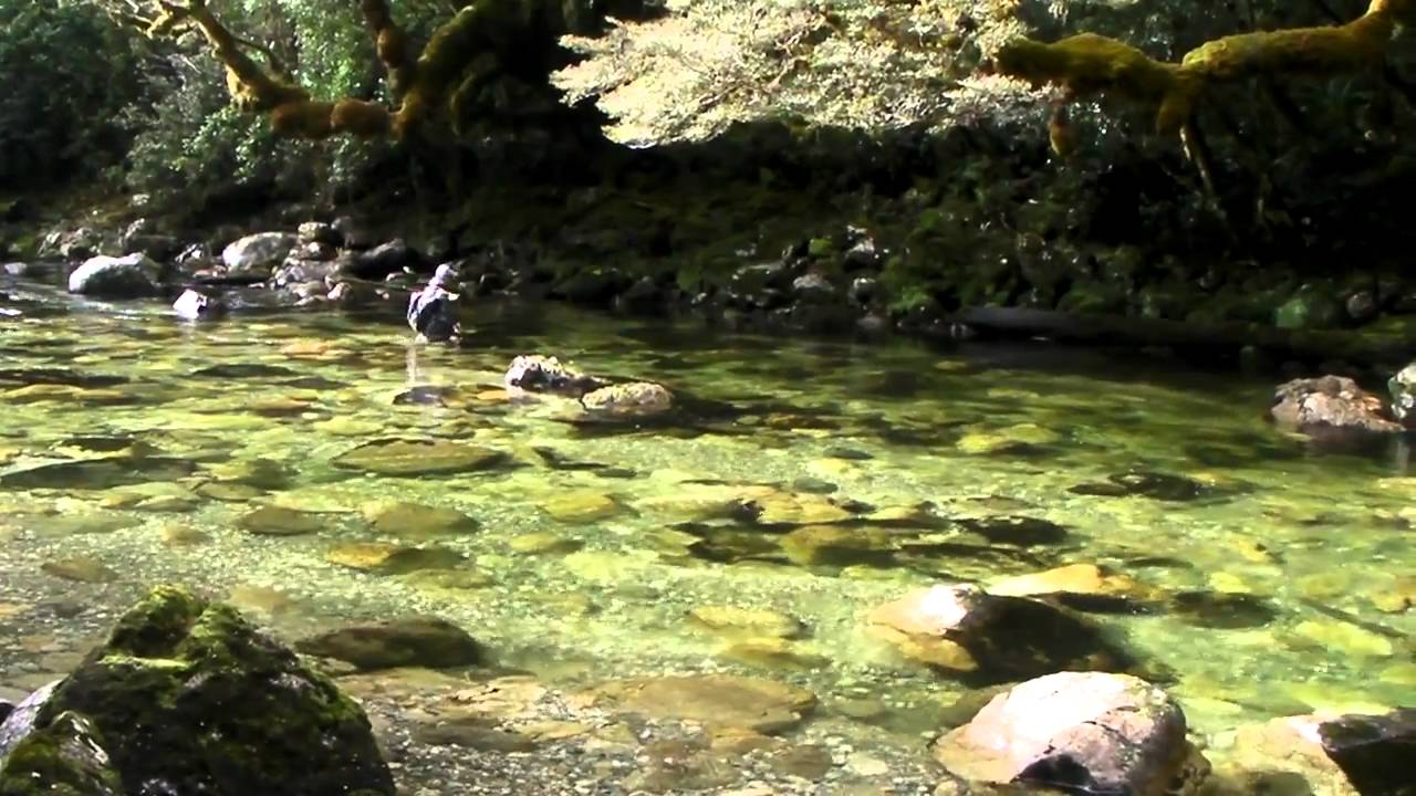 New zealand fly fishing mystery water youtube for New zealand fly fishing