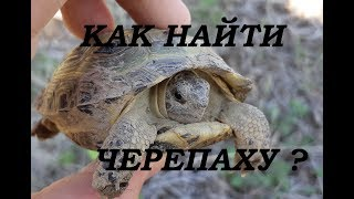 """Как найти степную черепаху ? Рубрика """"В мире животных"""""""