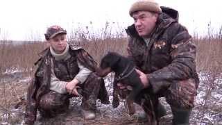 Охота с норными собаками в Тульской области.