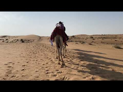 Camel walk in Dubai Desert Conservation Reserve.